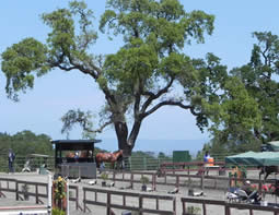 Horse Park at Woodside
